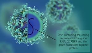퇴행성 실명질환 '유전자 가위' 치료법 개발