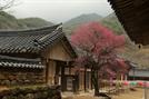 [휴-'산수유의 고향' 구례] 白·黃·紅...3色의 봄을 만나다
