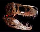 [헬로 사이언스]T렉스 이빨로 무는 힘이 무려 3.5톤