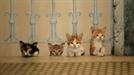 냥큐멘터리 '고양이 케디' ...이 세상 모든 고양이에게 보내는 러브레터