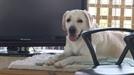 '특종세상' 소문난 효녀犬 호야가 상위 1% 천재견 된 비법은?