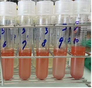 유용 항생물질 생산하는 신종(種) 해양미생물 발견