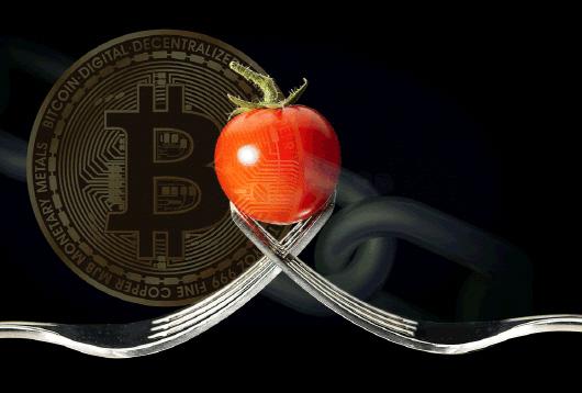 암호화폐 채굴기 열기로 토마토 재배...'크립토마토' 나온다
