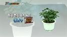 실내공기정화식물 중 초미세먼지까지 걸러주는 식물은?