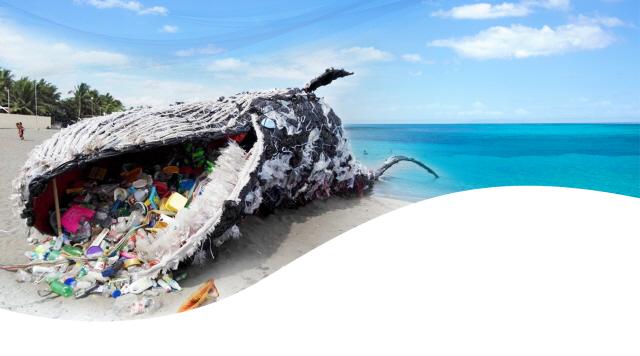 [글로벌WHAT]플라스틱 범벅 생선, 2050년 식탁을 점령하다