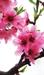 [시로 읽는 수요일] 늙은 꽃