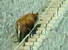 [서경씨의 #오늘도_출근]소처럼 일하다보니 정말 '소'가 됐다?