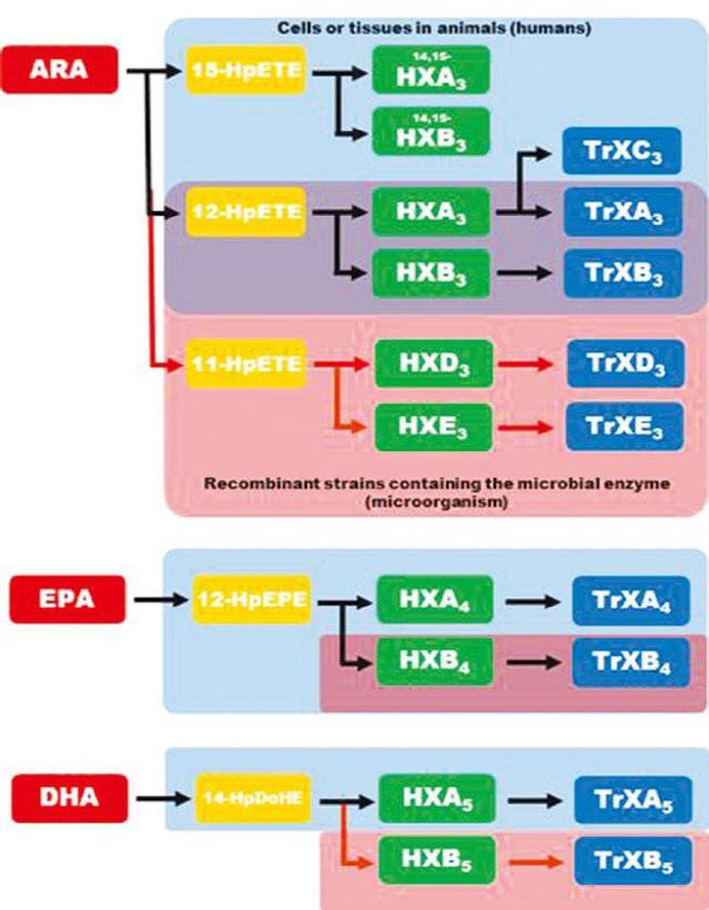 미생물 효소 이용, 당뇨병 치료 후보물질 생산