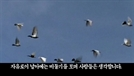 [영상] 남북정상회담날 북한 선전채널에 올라온 '비둘기 영상' 정체는?