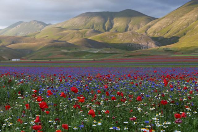 [사진으로 보는 세계] 꽃으로 물든 지상낙원 이탈리아
