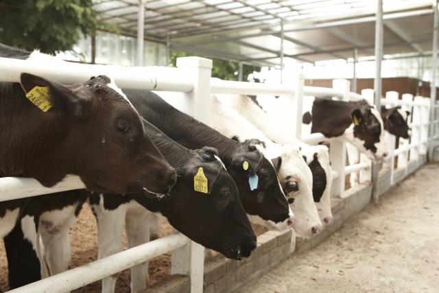 '400명이 나눠먹은 소 알고보니 광견병'…태국, 감염 공포 확산