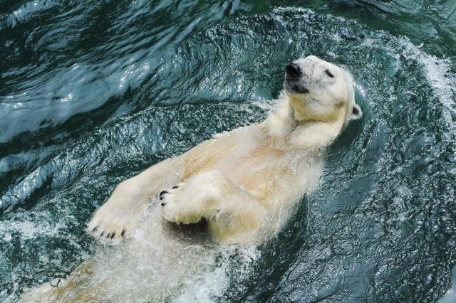 연말 英 이주하는 북극곰 '통키'와 함께 추억을