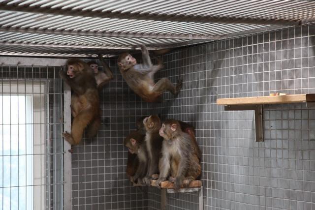 [사이언스]유전자 비슷한 원숭이·기억력 좋은 초파리...인류 구원할 '시약'