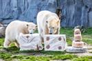 [사진으로 보는 세계] 첫돌 맞은 북극곰 '나누크'
