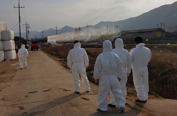 광주시, 구제역 확산 방지 총력…지역재난안전대책본부 운영