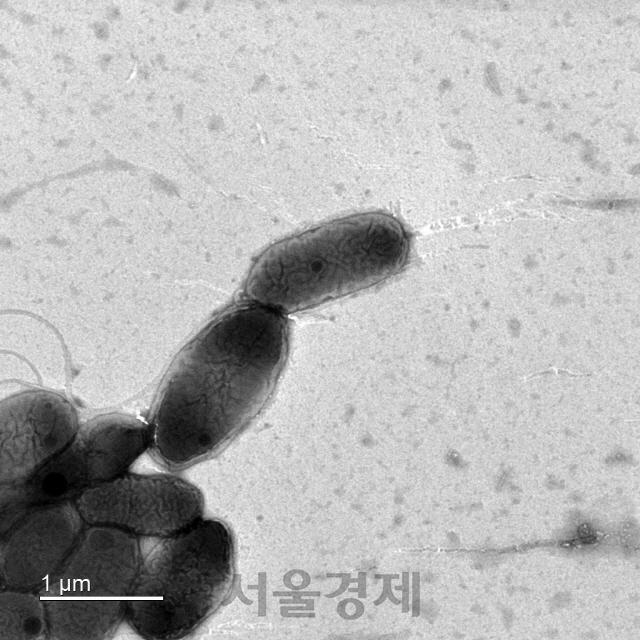 낙동강생물자원관 환경호르몬 분해능력 높은 신종 미생물 발견