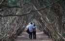 [나윤석의 영화 속 그곳] 나무 터널처럼 뒤얽힌 '그녀'와 '그녀'의 사랑