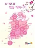 """주말 꽃구경 어디로? 부산 경주 벚꽃 개화시기 벌써 시작 """"연분홍 꽃망울 팡팡"""""""