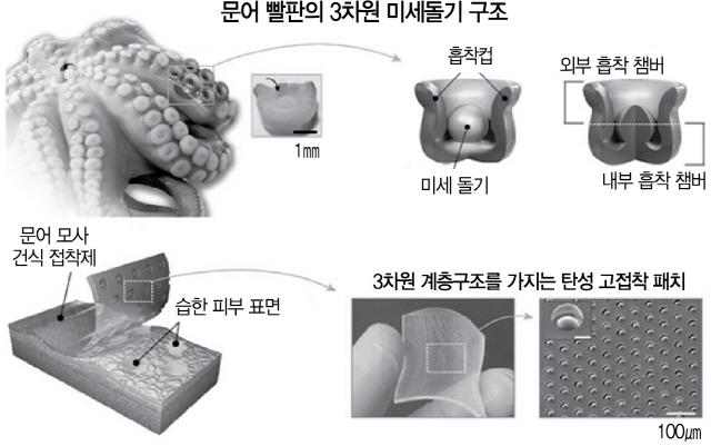 '이달 과학기술인상'에 방창현 성대 교수 '문어 빨판 모사 고점착 패치 기술 개발'