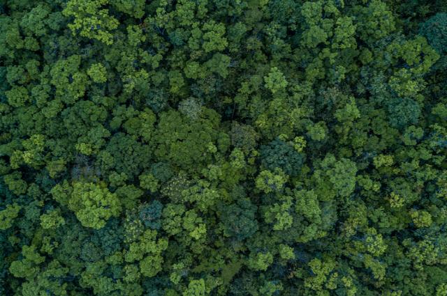 산림청, 드론과 빅데이터로 산림 병해충 잡아낸다