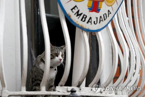 '어산지, 난 걱정마' 그의 반려묘는 무사 탈출