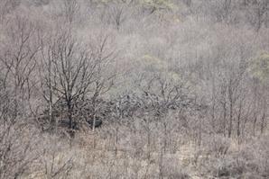 궁예가 태봉국 방어용으로 세운 '중어성' 흔적 드러났다