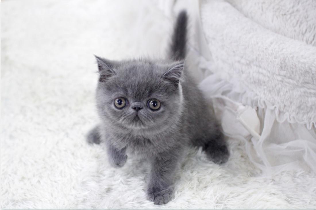 강아지·고양이분양 '집사나라' 넓은 규모와 다양한 품종 보유로 인천·일산 고객에 인기