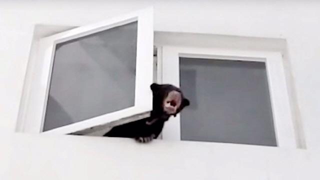 옆집서 난 이상한 소리, 알고보니 애완 곰…주민들이 발견