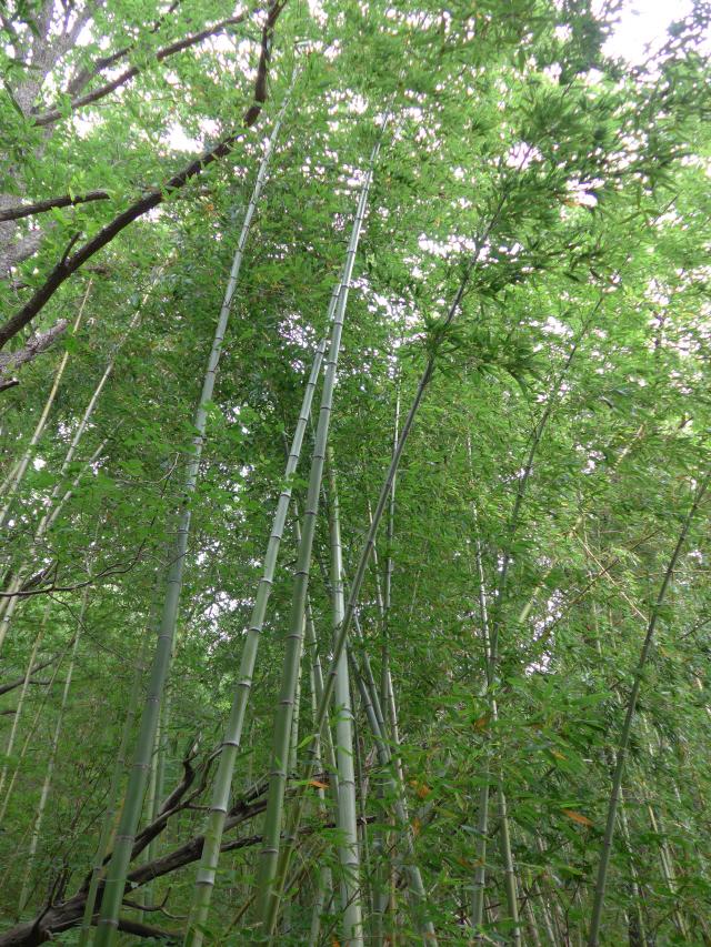 [나윤석의 영화 속 그곳]휘청이는 대숲...'봄날'처럼 짧은 사랑이 시작되다