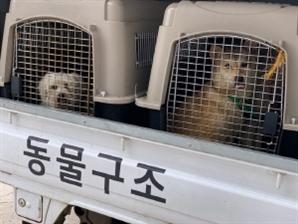 [토요워치]작년 총 7,979마리 유기…인구 15배 서울과 엇비슷