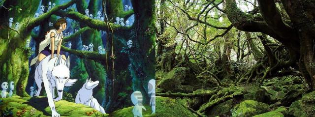 원령공주 숲에서 자라는 신비로운 나무 '야쿠스기' 이야기 [최정석의 우드아카데미]