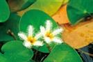 [ECO&LIFE] 비료·농약 없이 화장품 원료 대량생산...비건·할랄 친환경 인증도