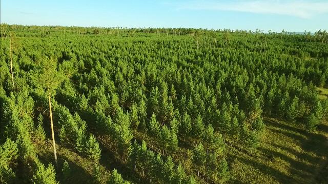 [라이프&] 36년 '푸르게 푸르게'…나무를 심고 나눔을 캐다