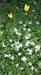 [시로여는 수요일] 쪼그만 풀꽃