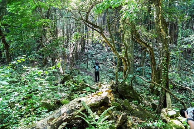 습지 낀 강줄기…빽빽한 삼나무길…올 휴가는 '미지의 세계'로 떠나자