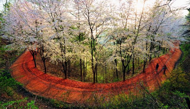 [ECO&LIFE] 계족산 황톳길·제주 동백동산…'에코힐링' 명소로 자리매김