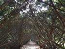 [car&fun] 다양한 꽃 만발한 '벽초지수목원'서 산책 즐기고