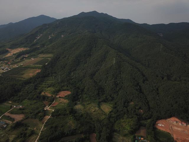 제천 박달재 인근 '자작나무 명품숲'