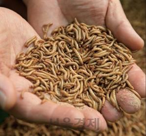 농진청, 식용곤충'고소애'…암환자 영양·면역력 강화에 효과