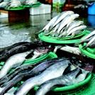 韓수산물, 상반기 일본 수출 5.7% 줄어