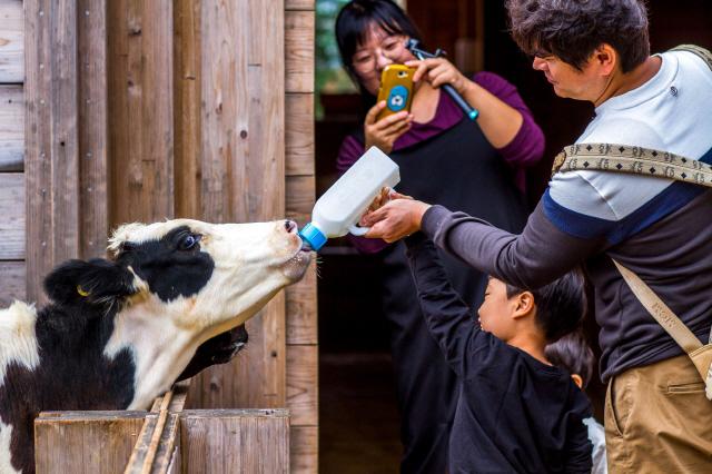 젖소 공수·무균포장·락토프리..매일유업, 잇단 최초로 유제품 새 역사