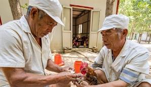 [최수문특파원의 차이나페이지] <28> 달리기닭·스마트팜 통해 농가소득 키우지만...토지 국유제로 '한계'