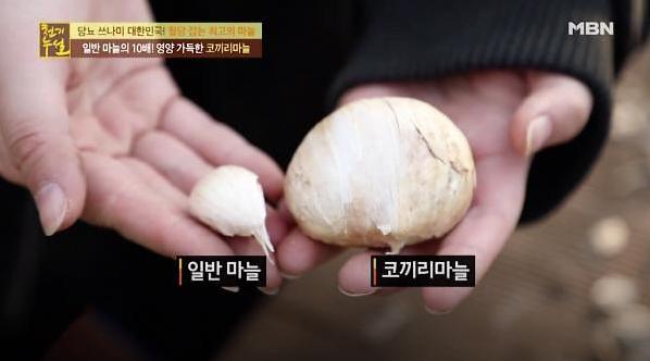 '일반 마늘 10배 크기' 코끼리마늘 효능 공개…'피로회복·암 예방에 탁월'