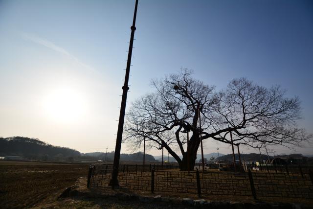 [오색인문학] 땅과 이름 가진 500살 거목 '인격'이 되다