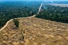 '지구의 허파' 아마존 산불, 중국이 원인?