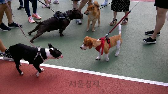 [뉴스터치] 송파구, 21~22일 반려동물 문화축제