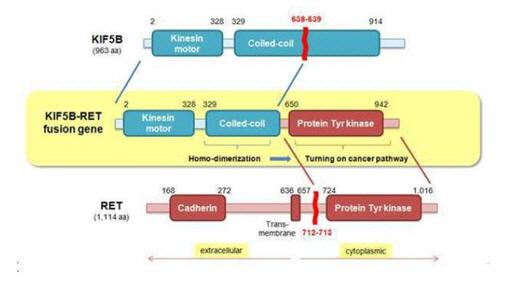 마크로젠, 폐암 원인 융합유전자 'KIF5B-RET' 유럽 특허 취득