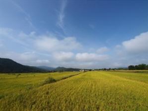쌀값 오르나...생산량 39년 만에 최소