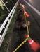 줄지어 이동하던 멧돼지 10마리 국도서 승용차와 충돌 즉사