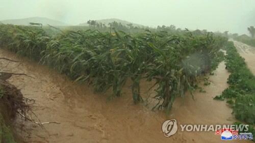 """""""북한, 올해 농작물 평년보다 적어…식량난 심화"""""""